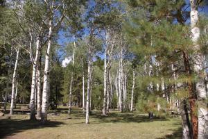 IMG 0328-Forest-Aspen72